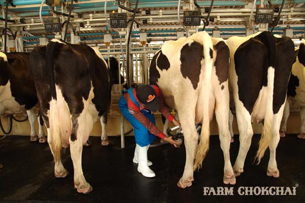 สมัครงาน ฟาร์มโชคชัย กลุ่มบริษัทฟาร์มโชคชัยเปิดรับสมัครพนักงาน หลายตำแหน่ง